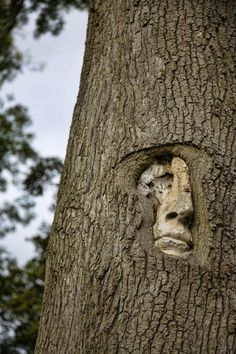 tree people at groombridge place, kent, UK by stu mayhew.something I must find to see for my self. Tree People, People People, Forest People, Instalation Art, Tree Faces, Deco Nature, Tree Carving, Green Man, Wood Sculpture