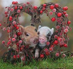 Sweet lovin