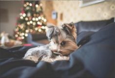 Pet-friendly Hotels in LA. Bring your pup along on your holiday travels! Visit our website and reserve a room with us. We are a pet-friendly hotel and look forward to welcoming you and your furry friends! #instatravel #photooftheday #fun #traveling #travel #traveler #losangeles #la #california #hotel #hotels