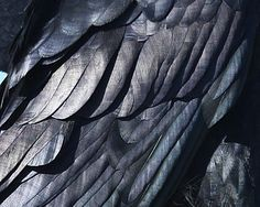 raven wing up close - Google Search