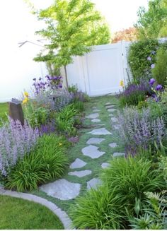 Day lily, walkers low catmint, salvia combo                                                                                                                                                                                 More