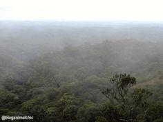 A neblina chegando. Parque Estadual da Serra do Mar - Núcleo Curucutu, em São Paulo/SP. Abril/14.
