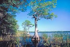 Everglades Trail