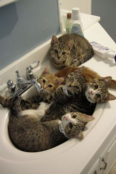 "17 Cats Who Know That The Sink REALLY Belongs To Them #refinery29 http://www.refinery29.com/the-dodo/135#slide-15 ""Sinks are the perfect size for group snuggles."""
