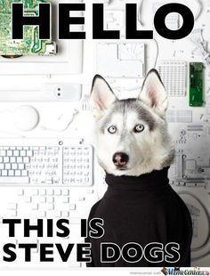 Steve Dogs ha ha so funny
