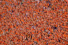 Sea of Orange
