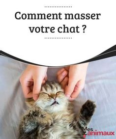 Remark massage your cat - to # - Pets Online 2019 - Chat Crazy Cat Lady, Crazy Cats, Pet Dogs, Dogs And Puppies, Pets Online, Cat Info, Diy Stuffed Animals, Cat Food, Yorkshire Terrier