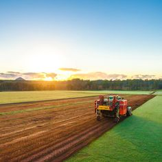 Our #legend couch is the #sportsturf of choice for local sport clubs and high profile sporting arenas such as #thegabba and #suncorpstadium. It's high wear resistance also make it a #perfect choice as a #backyard for #active families and high traffic zones. #fresh #harvest #sunrise #turf #turffarm #twinviewturf #lawnsolutionsaustralia #grass #lawn #lawnyoullbeproudof #australia #nature #naturelovers #instadaily #instagood #sunshinecoast #sunshine