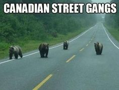 Canada is indeed very special. There are many funny things you will only find meanwhile in Canada. Check out 50 hilarious only in Canada pictures compilation that will make your day. Humour Canada, Canada Funny, Canada Jokes, Canadian Memes, Canadian Things, Canadian Humour, Canadian Bacon, Funny Captions, Funny Memes