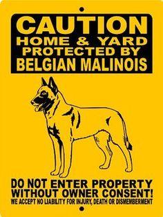 belgium maloinis - Google Search