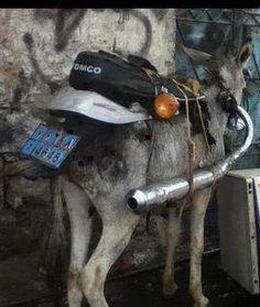 Organic Motorcycle