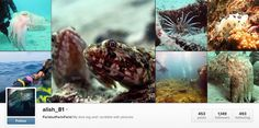 25 Istagram acc every diver need to follow..  alish_81 is my cousin *wheee* i am proud ☺️☺️