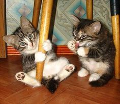 Funny kittens! share cute things at www.sharecute.com