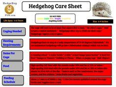 Hedgehog Food, Hedgehog Care, Hedgehog Accessories, Hedgehogs, 6 Years, At Least, Hedgehog, Pygmy Hedgehog