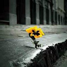 A esperança é um alimento da nossa alma, ao qual se mistura sempre o veneno do medo. Jamais se desespere em meio às sombrias aflições de sua vida, pois das nuvens mais negras cai água límpida e fecunda. Procure semear otimismo e plantar sementes de paz e justiça. Diga o que pensa, com esperança. Pensa no que faz, com fé. Faça o que deve fazer, com amor. Eu me esforço para ser cada dia melhor, pois bondade também se aprende...