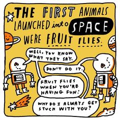 Fruit Flies, Food Safety, Doodle, Have Fun, Jokes, Drawing, Space, Sayings, Illustration