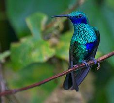 Resultado de imagen para fotografias de colibries