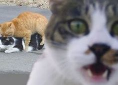 The horridly scandalized cat. One of the greatest animal photobombs of all time.