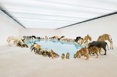 Falling Back to Earth | Cai Guo-Qiang: Installation view of Heritage at the Gallery of Modern Art, Brisbane, 2013