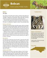 View or download the full profile from the NC Wildlife Resources Commission