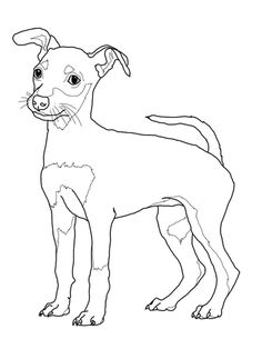 Miniature Pinscher Puppy Coloring page