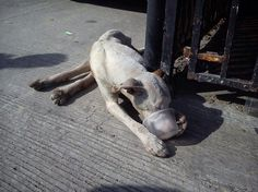 Emaciated, disabled dog struggled to survive alone on the streets