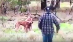 Canguru dá mata-leão em cão e dono do cão luta boxe para salvá-lo (VÍDEO) – Surrealista