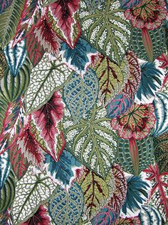 Leaf patterns. Coleus-green by Philip Jacobs