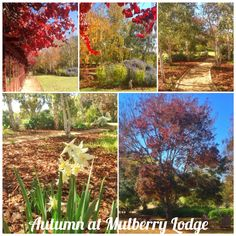 Autumnal colours at Mulberry Lodge