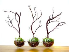 20 Ideas for Home Decorating with Glass Plant Terrariums, Unique Eco Gifts