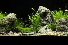 saintly's low light plant IWAGUMI - Page 2 - Aquascaping - Aquatic Plant Central