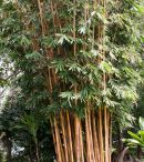 October Issue of The Bamboo Column Bamboo Construction, October, Plants, Plant, Planets