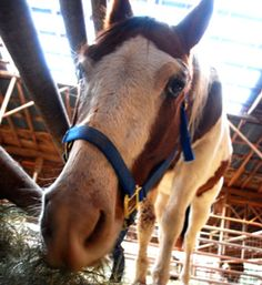 From ASPCA, a hay bank for low-income horse owners.