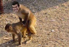 Walijczyk zamienił się w małpę i szczęśliwy ładuje od tyłu • Gareth Bale wali futrzanego zwierzaka • Wejdź i zobacz śmieszne foto >> #bale #football #soccer #sports #pilkanozna #funny #memes