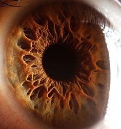 Incredible macro-photography of people's eyes   Just Imagine - Daily Dose of Creativity
