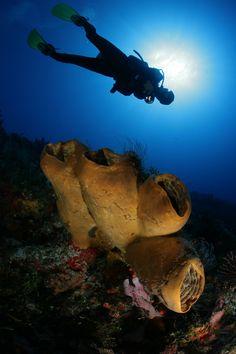 Buceo en Cozumel - Fideicomiso de Promocion Turistica de Cozumel