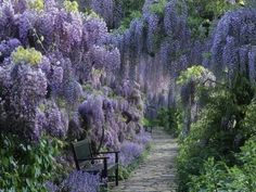 Let's sit under the wisteria and wstch the world go by...
