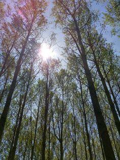 De zon schijnt in het Lemurisch bos