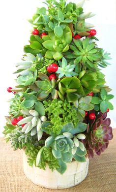 Succulent Christmas Centerpiece