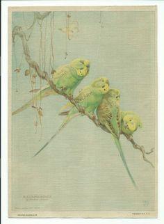 Vtg Winifred Austen Silkscreen Print ~ A Conference ~ Parakeet Birds ~ a Vintage Touch