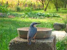 Madártalálkahely a kertben - az itató Outdoor Decor, Animals, Home Decor, Animales, Decoration Home, Animaux, Room Decor, Animal, Animais