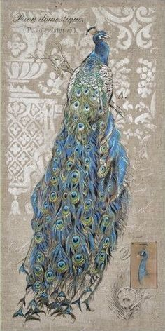 Peacock on Linen I (Chad Barrett)