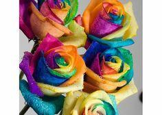 fiori olandesi multicolor^_^