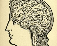 The mysterious Alesha Sivartha had a formidable collection of phrenology maps. Mysteries Of The World, Palm Reading, Interesting News, Historical Fiction, 19th Century, Anatomy, Mystery, Mysterious, Charts