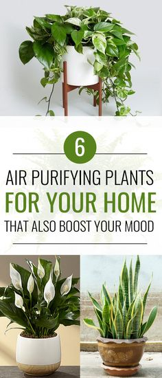 Urban Garden 6 Air Purifying Plants That Will Clean The Air And Boost Your Mood - These air purifying plants will clean the air in your home with little to no effort. Plus, having plants in your home is proven to boost your mood! Inside Plants, Cool Plants, Plants That Clean Air, Indoor Plants Clean Air, Air Cleaning Plants, Interior Garden, Interior Plants, Kitchen Interior, Interior Design