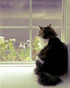 images of cats looking in windows - Bing Images