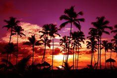 Palmiers sur fond de coucher de soleil violet | Fonds d'écran téléchargements WallPaperry