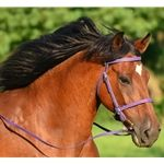 Two Horse Tack - ENGLISH BRIDLE made from BETA BIOTHANE (Solid Colored)