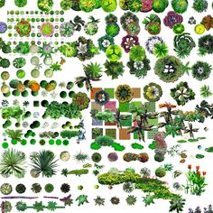 TREE+PSD+02.jpg 1600×1600 pixels