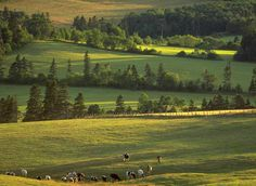 The pastures of Prince Edward Island. | 34 Reasons The Maritimes Is The Best Place On The Planet